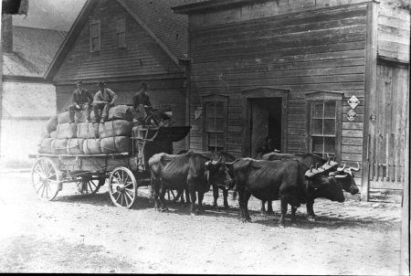 Ox pulled wagon